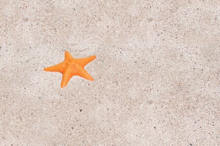 A sea orange star on the beach photo