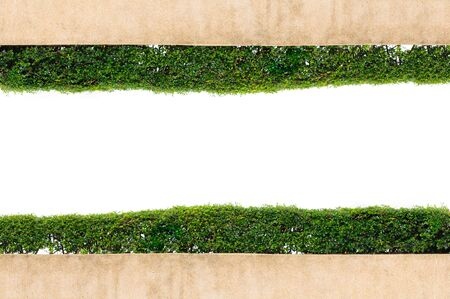 frame green grass isolated on the white background