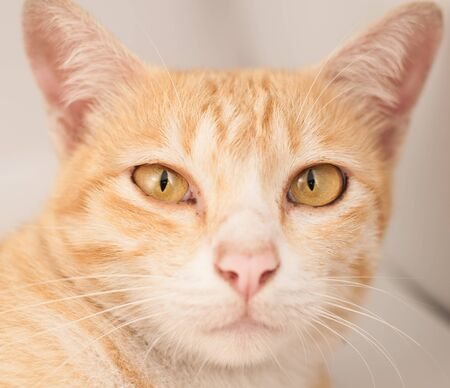 Cat Straight face and big eye on white background Stock Photo - 15381926