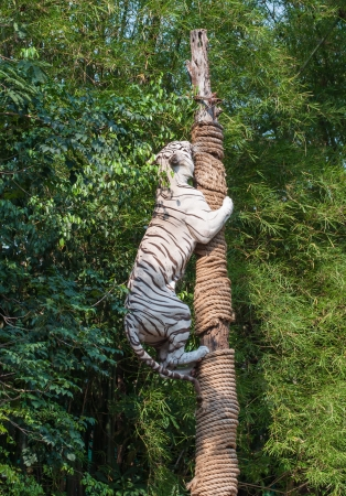 White tiger climbing trees show of Thailand photo