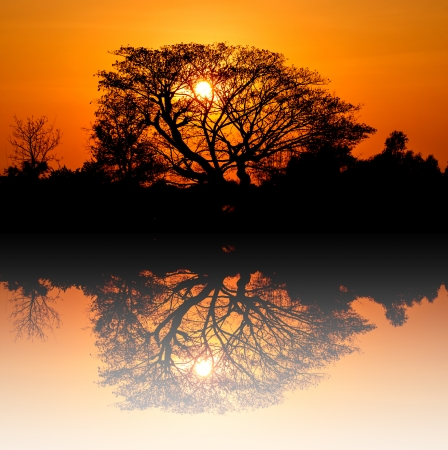 Sunrise silhouette behind the trees at Thailand photo