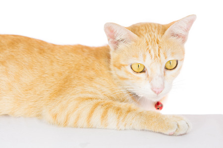 Cat blank poster board isolated on over white background photo