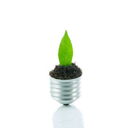 Green plant new life on lamp out of a bulb, green energy concept on over white background photo