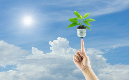 hands holding lamp light bulb new life plant on sky background photo