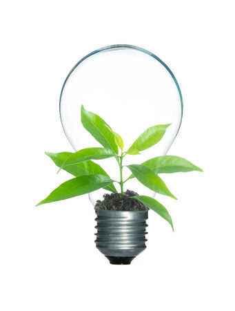 Tree sprout inside lamp light bulb isolate on over white background photo
