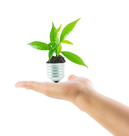 hands holding lamp light bulb new life plant on over white background photo