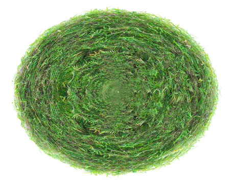 Rectangle green grass texture on over white background Stock Photo
