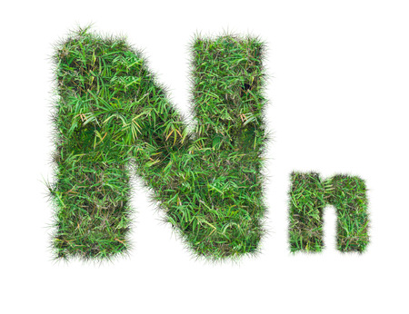 letter N on green grass isolated on over white background Stockfoto