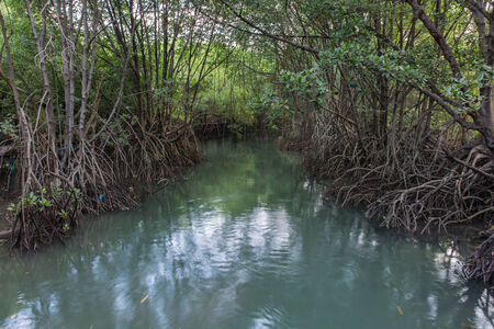 unwanted flora: The forest mangrove at Lamchabang of Thailand Stock Photo