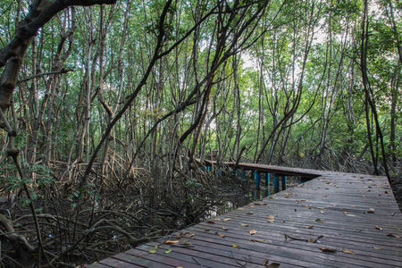 furnish: The forest mangrove at Lamchabang of Thailand Stock Photo