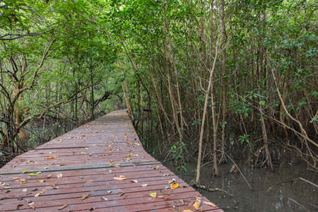 rosy cheeked: The forest mangrove at Lamchabang of Thailand Stock Photo