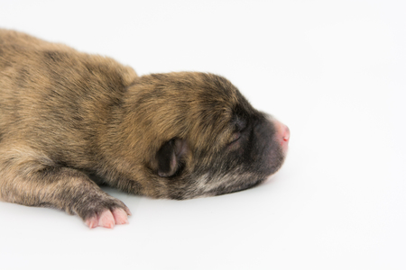 pup: One day for newborn pup isolate on white background