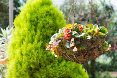hanging basket: Beautiful flower hanging basket in the garden