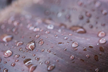 attenuation: leaf with water drops for texture background