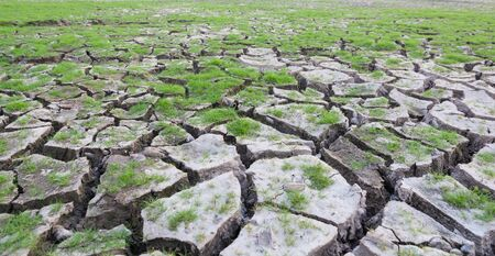 barrenness: land with dry cracked mud ground texture with new plant