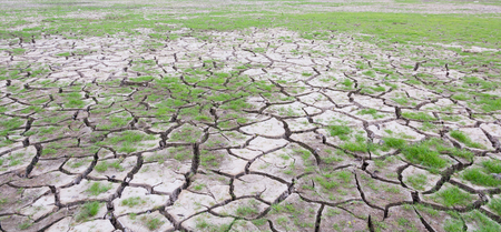 mire: land with dry cracked mud ground texture with new plant
