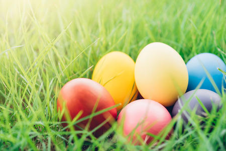 Easter egg on garden grass background, happy easter day concept