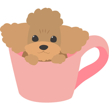 Cup dog (toy poodle)