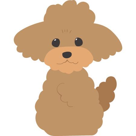 Sentado en el perro (caniche de juguete)