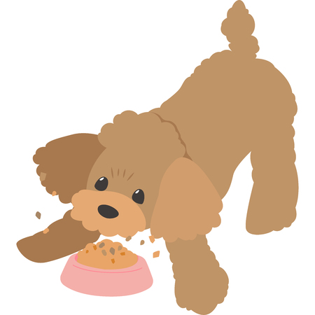 Feeding dog (toy poodle)