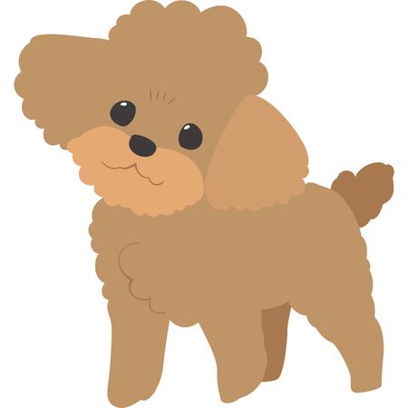 Perro cámara (caniche de juguete) Ilustración de vector