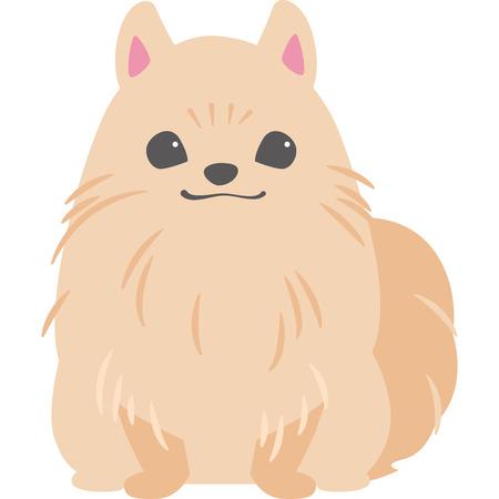 Dog to sit (Pomeranian)