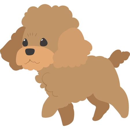 Walking dog (toy poodle) Illustration