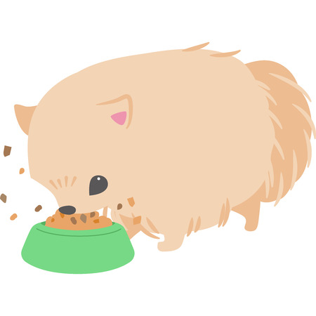 Feeding dogs (Pomeranian)