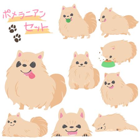 Pomeranian set Illusztráció