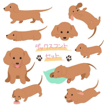 Dachshund set illustration