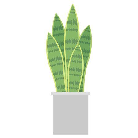 Houseplants Sanseberia Illustration