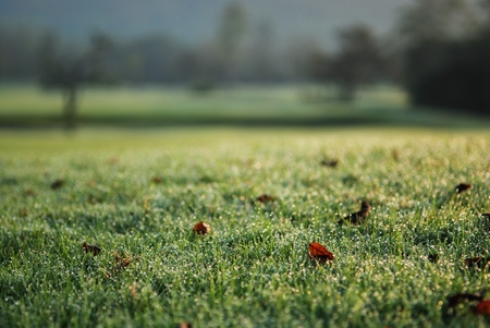 Morning grass with dew drops in golf course