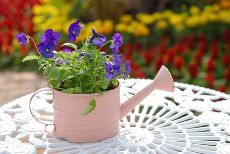 Lovely pot of pansies against blurred colorful flowers background photo