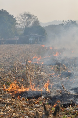 Fire in the corn field after harvest, background house ,forest and mountain