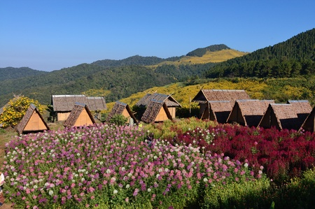 thatch huts on hills in northern Thailand and  Flowers field  Bbackground mountain and field of Wild Mexican Sunflowers  Stock Photo