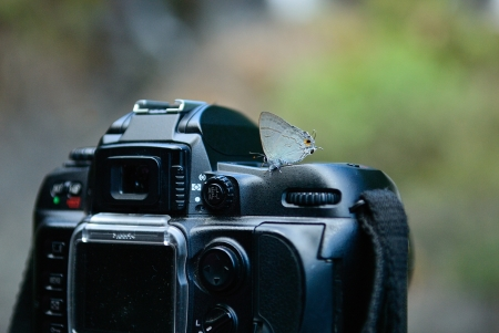 Butterfly and dslr camera at waterfall in the forest of Mae Hong Son province, Northern of Thailand