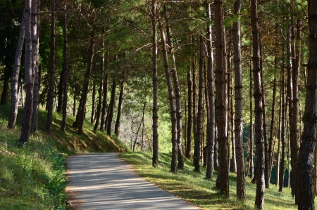 The Road in Pine Tree Forest at Pang Ung lake