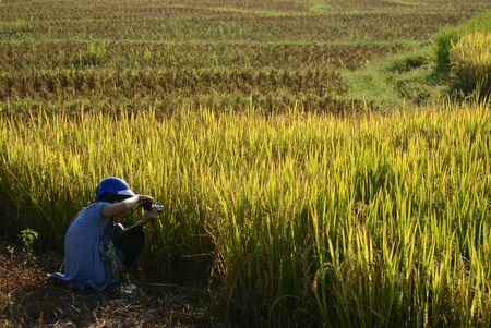 Woman take photo a Rice paddy fields.