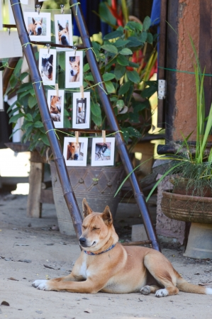 A dog waiting to sell postcards of themself Stock Photo