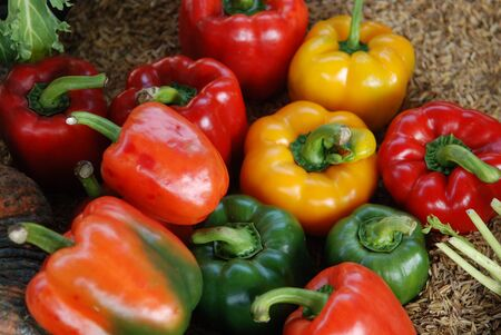 red, green and yellow Bell Peppers on Husk Stock Photo