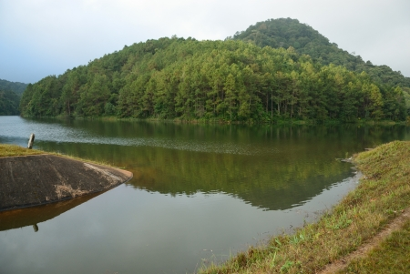 spillway at Lake and verdant pine forest