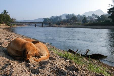 A dog sleep near Pai river,Thailand  Stock Photo