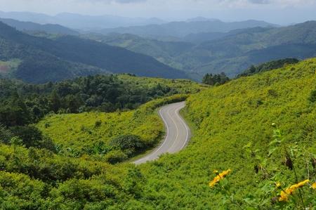 Asphalt road sharp S-Curve along with Wild Maxican daisy field