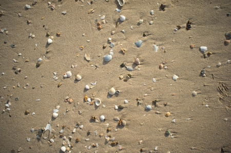seashell and sand as a textured background