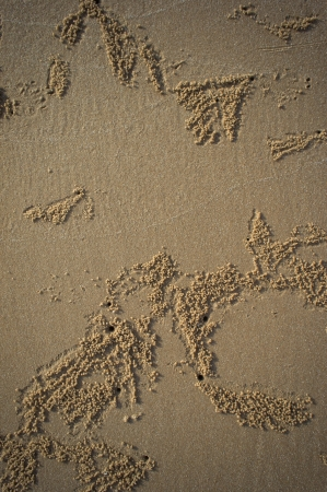 Ghost crabs  sand as a textured background Stock Photo