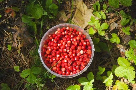 Bucket of strawberries in the forest - the view from the top, close up