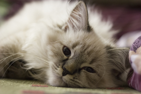 A cute kitten lies on the couch Stock Photo