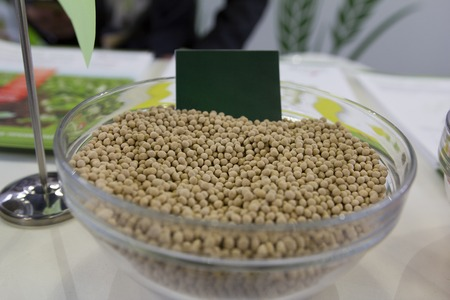 modified: Genetically modified millet in the glass saucer agricultural concept