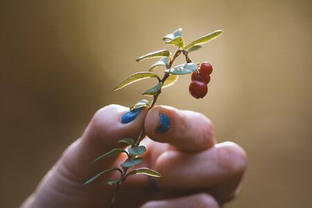Forest berry in woman hand - close up Stock Photo