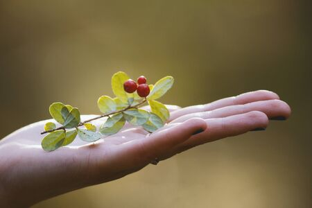 Forest berry in open palm of woman - horizontal